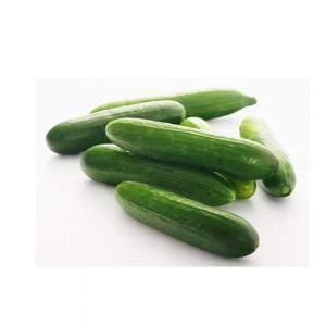 Cucumber Hydroponic, Uae, Per Kg