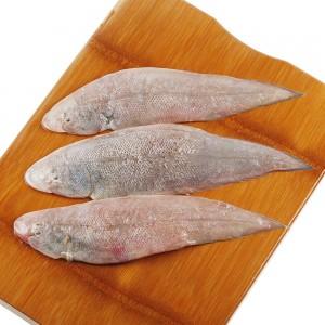 Fresh Mussa Fish, Per Kg, Uae