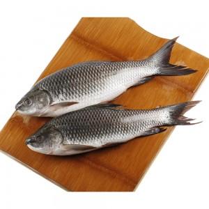 Fresh Rahoo Fish, Per Kg, Uae
