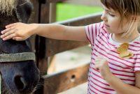 Selbstbestimmung-bei-Kindern-Zoobesuch