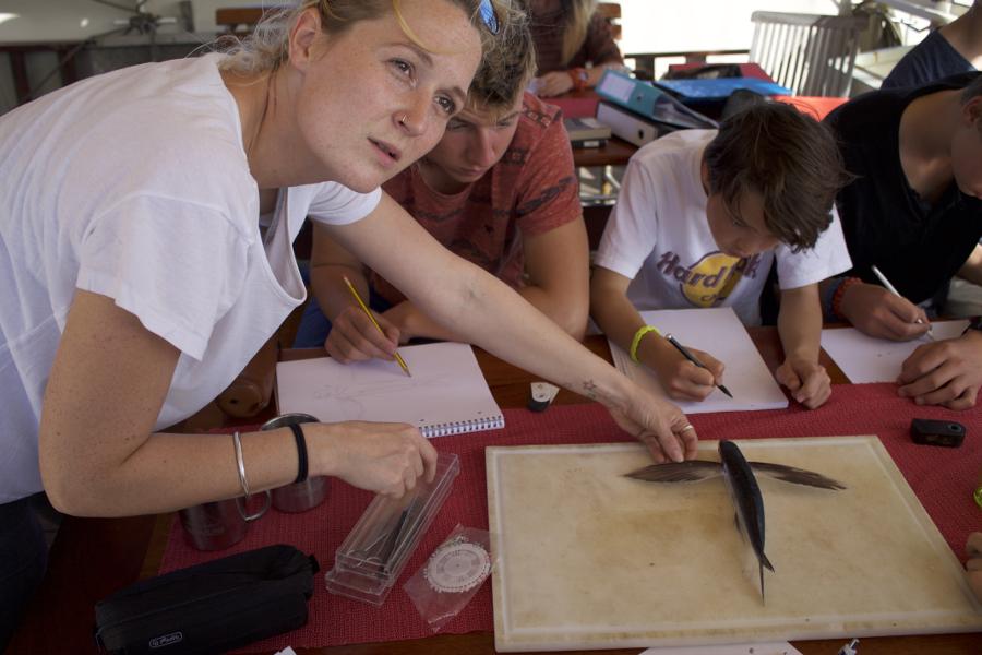 Obduktion Fliegender Fisch_Ocean College