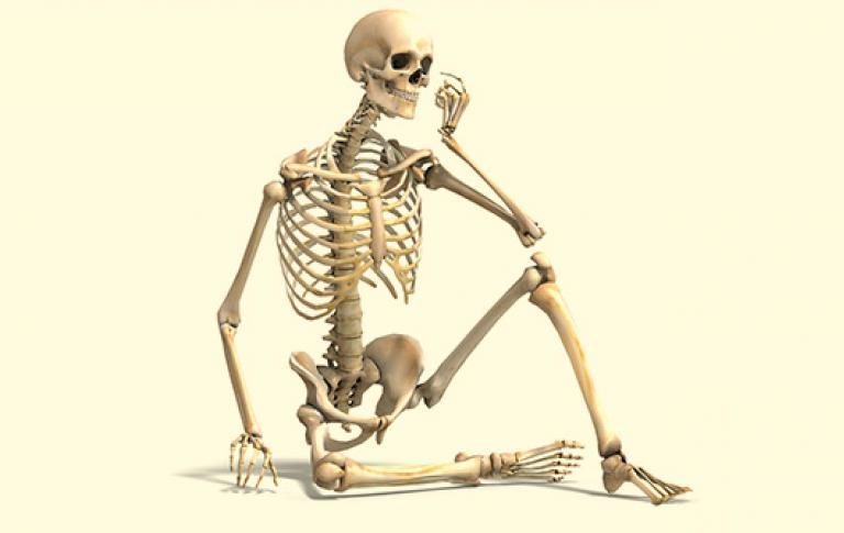 Скелет человека картинки веселые жемчужные новогодние