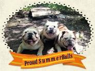ProudSummerBulls