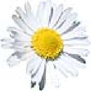 BlumeAmeli