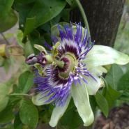 une_fleur