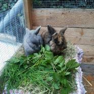 Rabbitfan