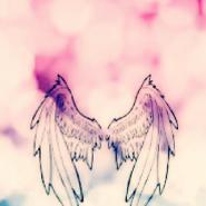 Wings_14