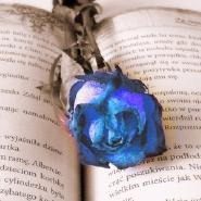 blauerose1