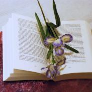 anys_sweet_bookworld