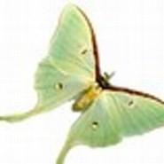 Origamipapillon