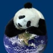 Pandabear