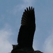 Windflug
