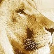 der-Löwe