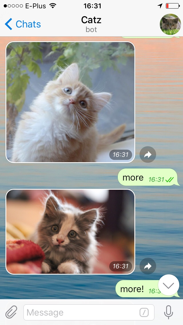 screenshot from my telegram chat with @catzbot