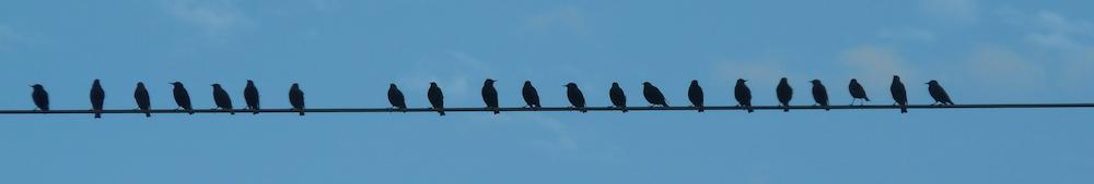Birds on a line.