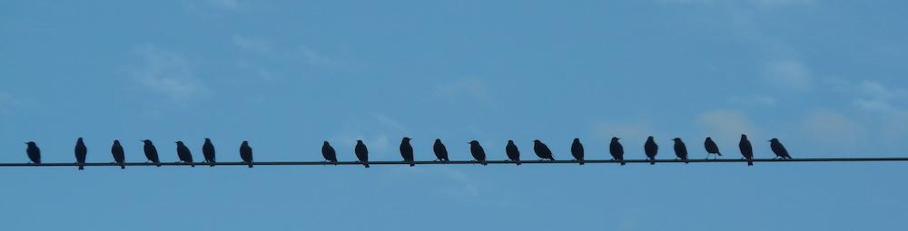 Vögel auf Stromleitung