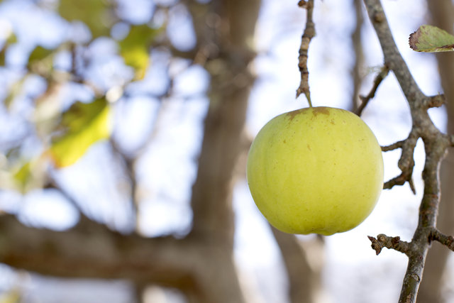 Image of apple on a tree, representing nurturing of customers.