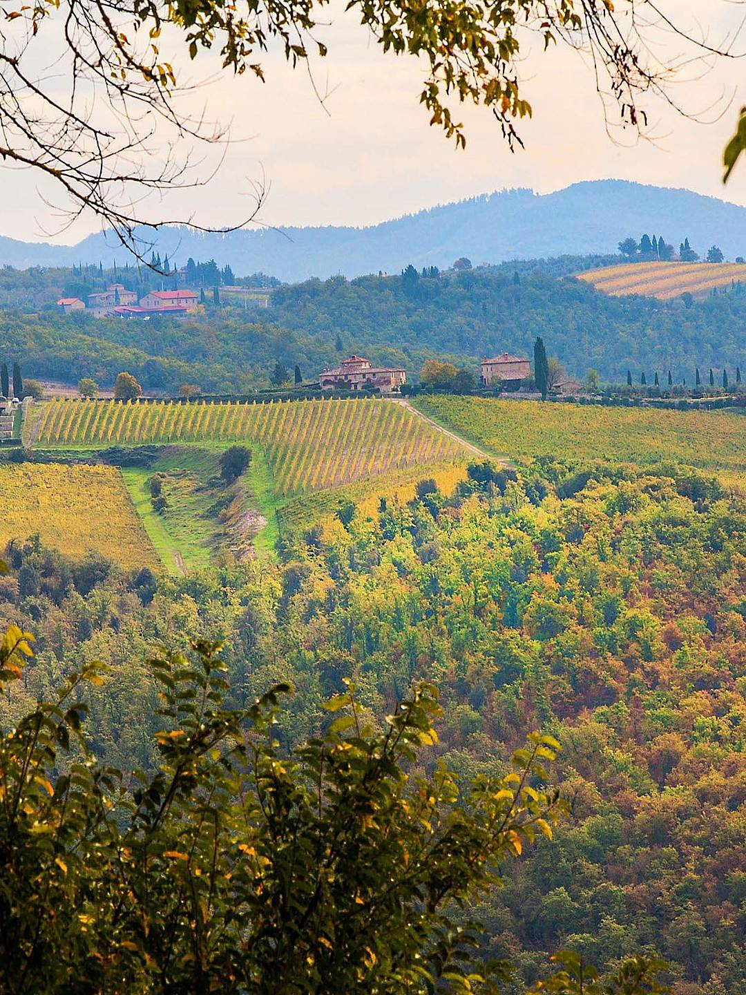 Chianti is one of Italy's most picturesque regions.