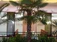 Balcony - Apartment A-2630-b - Apartments Makarska (Makarska) - 2630