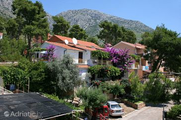 Property Ivan Dolac (Hvar) - Accommodation 4584 - Apartments near sea with pebble beach.