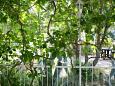 Terrace - view - Apartment A-6236-c - Apartments Vodice (Vodice) - 6236