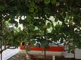 Terrace - view - Apartment A-7352-b - Apartments Valbandon (Fažana) - 7352