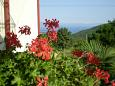 Courtyard Labin (Labin) - Accommodation 7468 - Apartments with pebble beach.