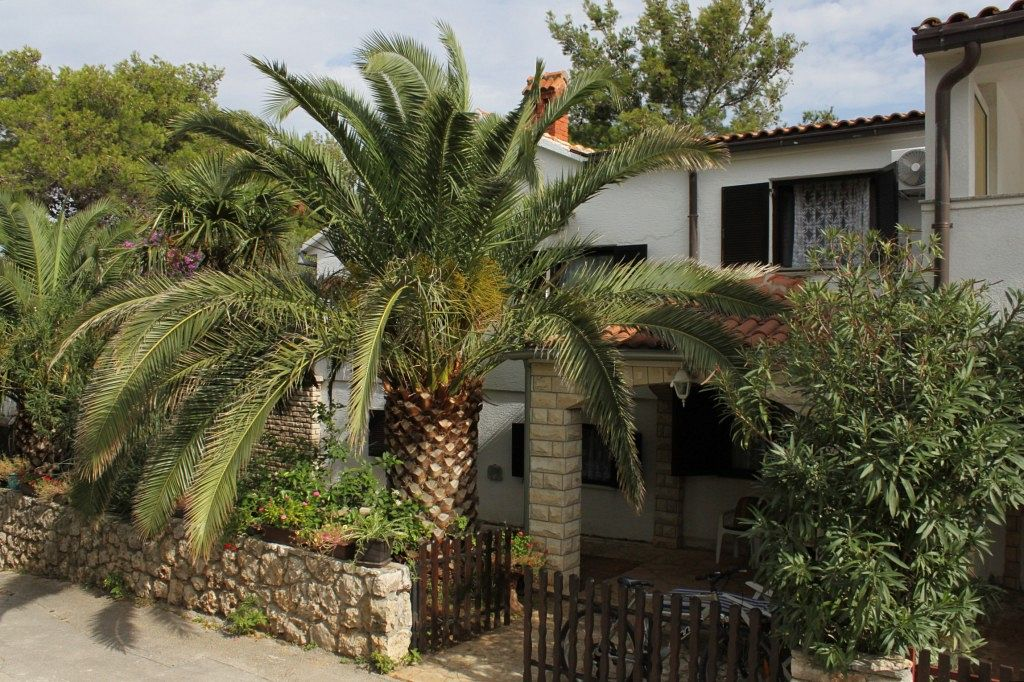Apartmány s parkoviskom v meste Ždrelac - 8514
