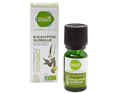 Eucalyptus_Globulus.jpg