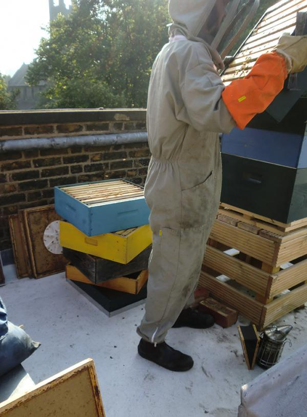 Steve starts to remove the boxes with honey in them. © Rena Melnyczuk