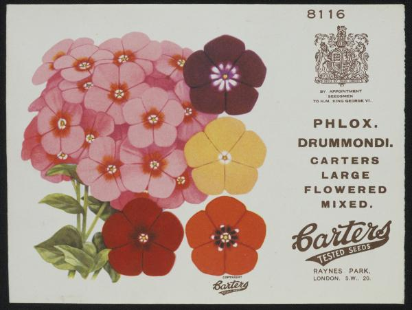 Seed packet for Carters Tested Seeds Ltd., 'Phlox. Drummondi, Carters Large Flowered Mixed', ca. 1935-1940. Museum number E.538-1994. © Victoria and Albert Museum, London/Carters Tested Seeds Ltd.