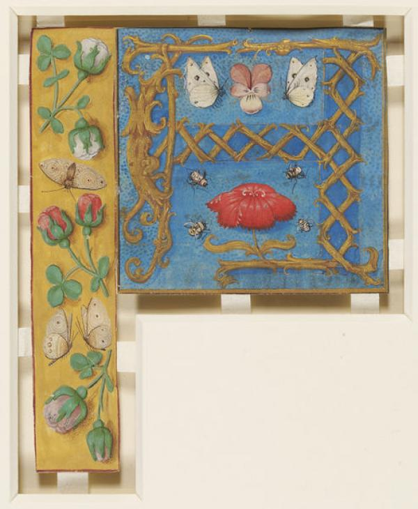 Illuminated letter A from a manuscript, c.1520