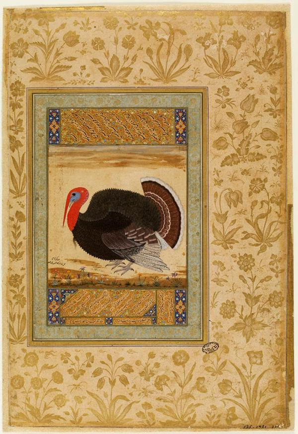 Painting, turkey, Mansur, Mughal, about 1612, opaque watercolour and gold on paper. Museum no. IM.135-1921, © Victoria and Albert Museum, London