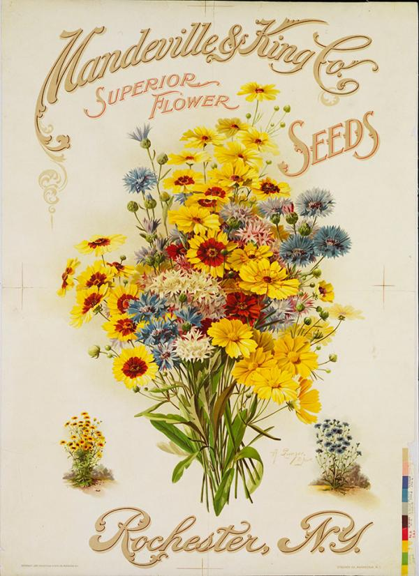 Mandeville & King Co., Superior Flower Seeds, poster, A. Sunzer, 1907. Museum no. E.2900-1980. © Victoria and Albert Museum