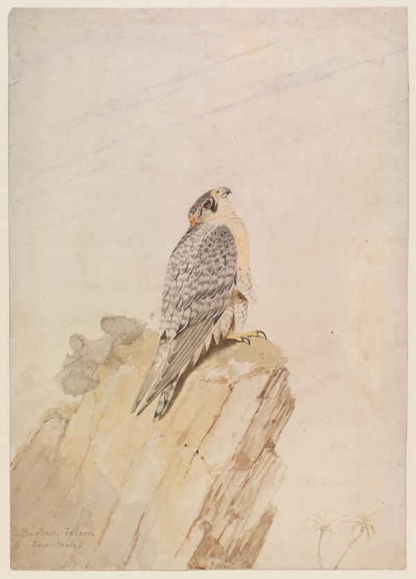 Watercolour, William Brodrick, about 1872. Museum no. SD.178. © Victoria and Albert Museum, London.
