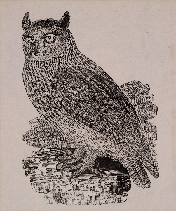 Wood engraving by Thomas Bewick, England, ca. 1797. Museum no. E.266-1994. ©Victoria and Albert Museum.