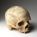 Human cranium signed by the cast of 'Hamlet' from the acclaimed Royal Court Theatre production, 1980 (signed). Museum no. S.151-2007 © Victoria and Albert Museum, London