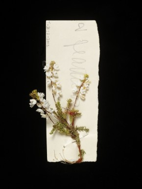 Artificial heather flower, from a spray used on a bonnet in Princess Beatrice's trousseau