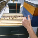 tending the hives at V&A