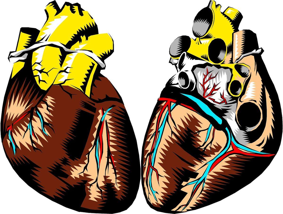 Une étude qui a exposé des souris à la vapeur de cigarette électronique et à la clope et le lien entre la vape et la maladie cardiaque.
