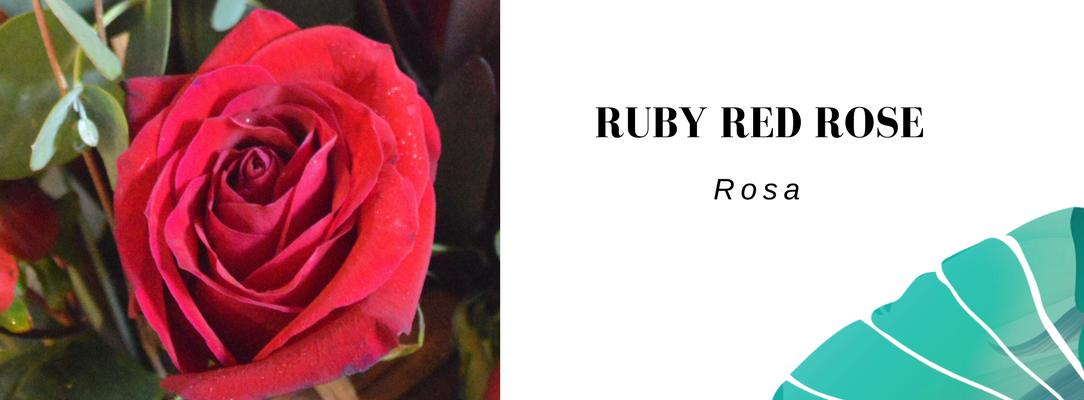 Vela red rose letterbox flowers