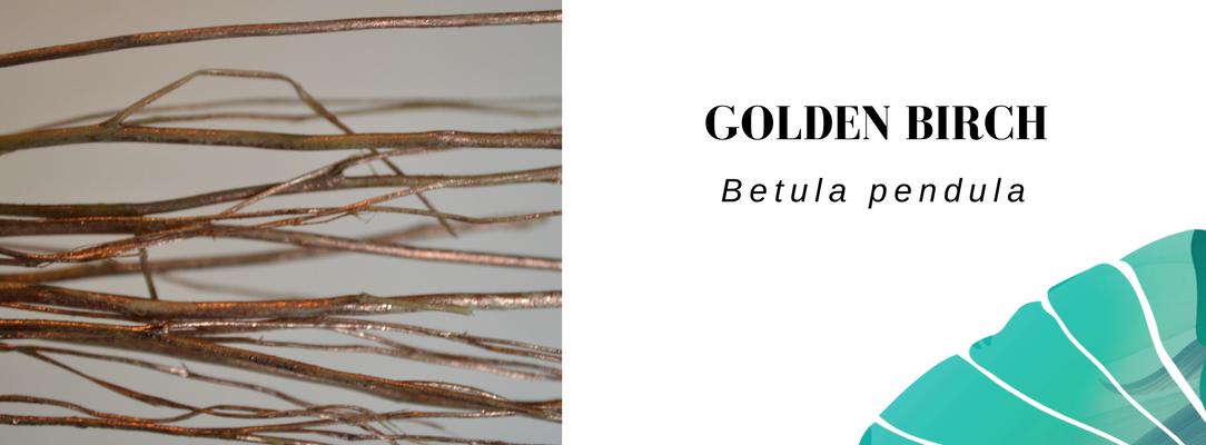 Golden birch Vela letterbox flowers