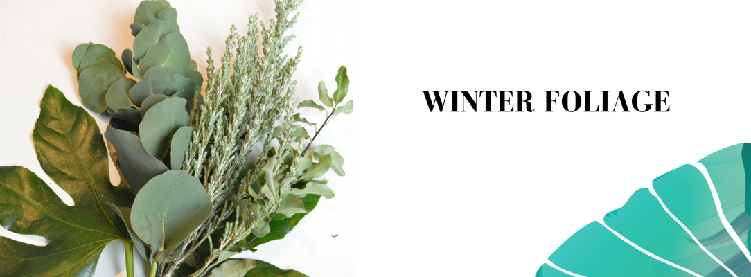 winter foliage Vela letterbox flowers