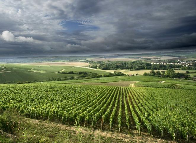Wine & Spirits Top 100 2015: Borgoña
