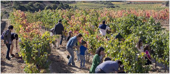 Familias vendimiando en Eguren Ugarte