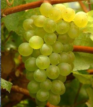 Fuente de la imagen: Casa del Vino Tenerife