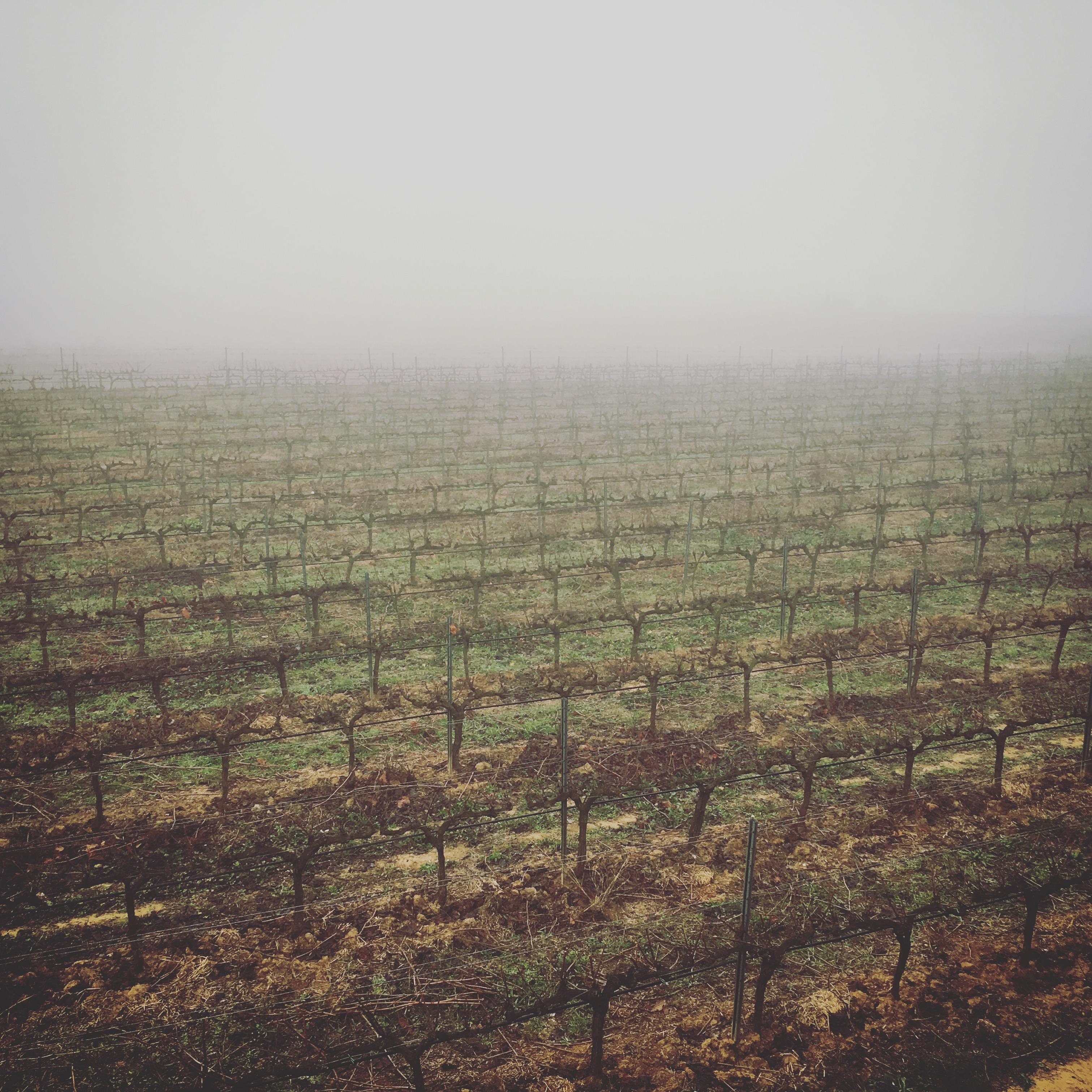 Sueños entre nieblas