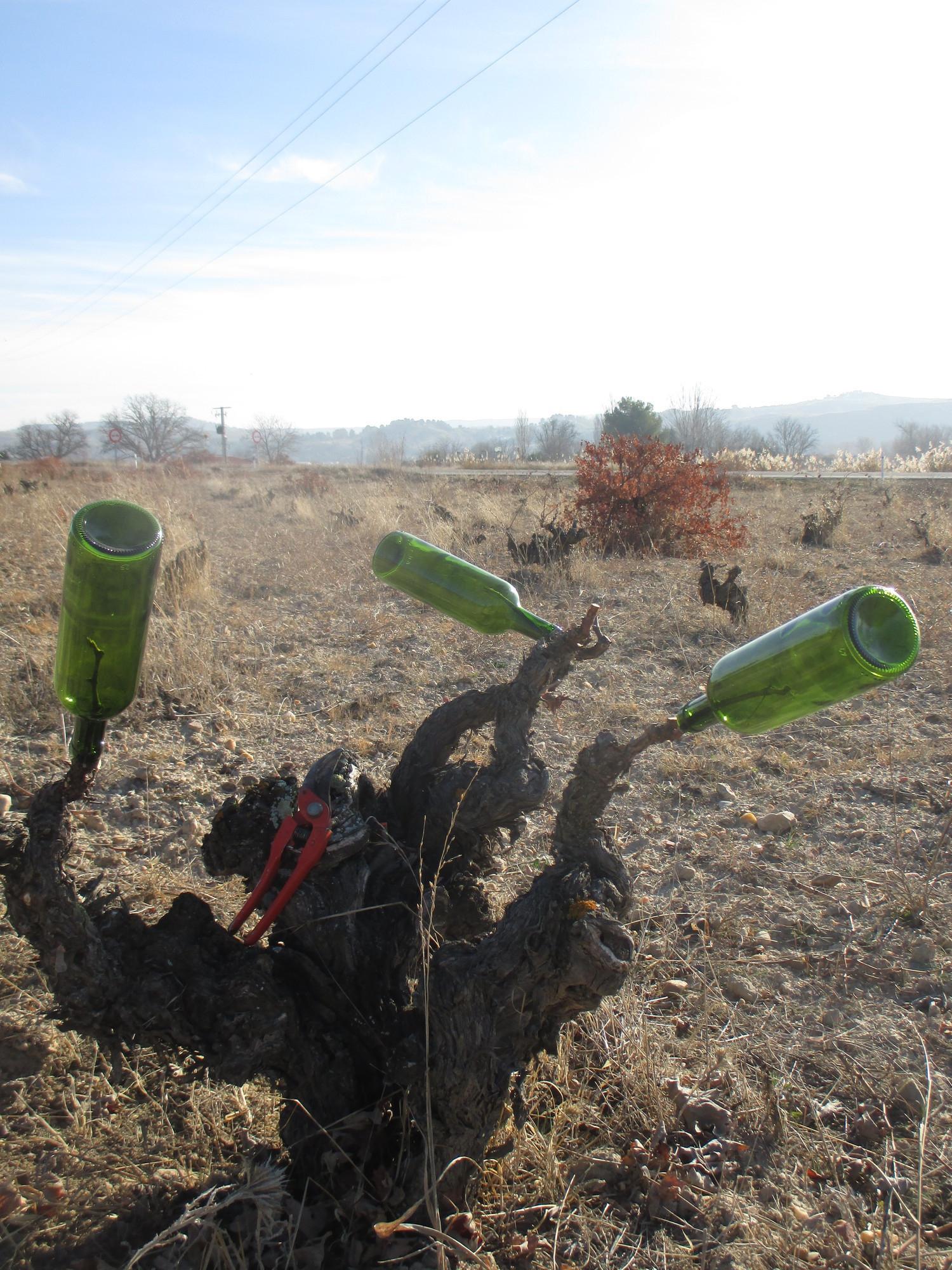 De la botella a la cepa