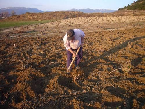 cultivo tradicional viñedo atlas