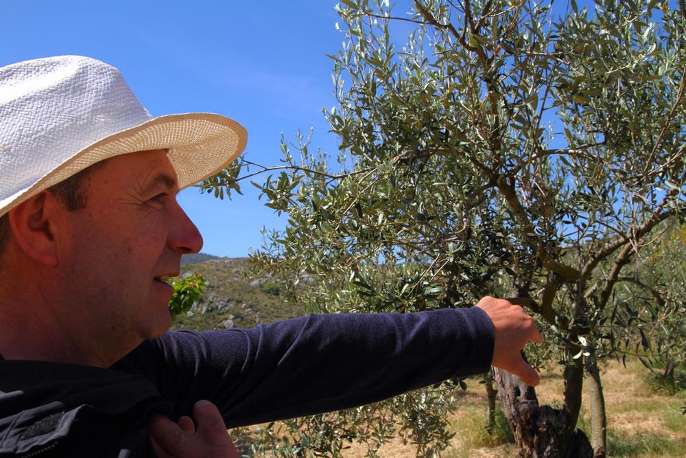denominacions de origen aceite de oliva españa